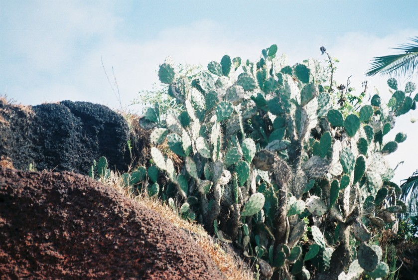 Cacti on Ashwem